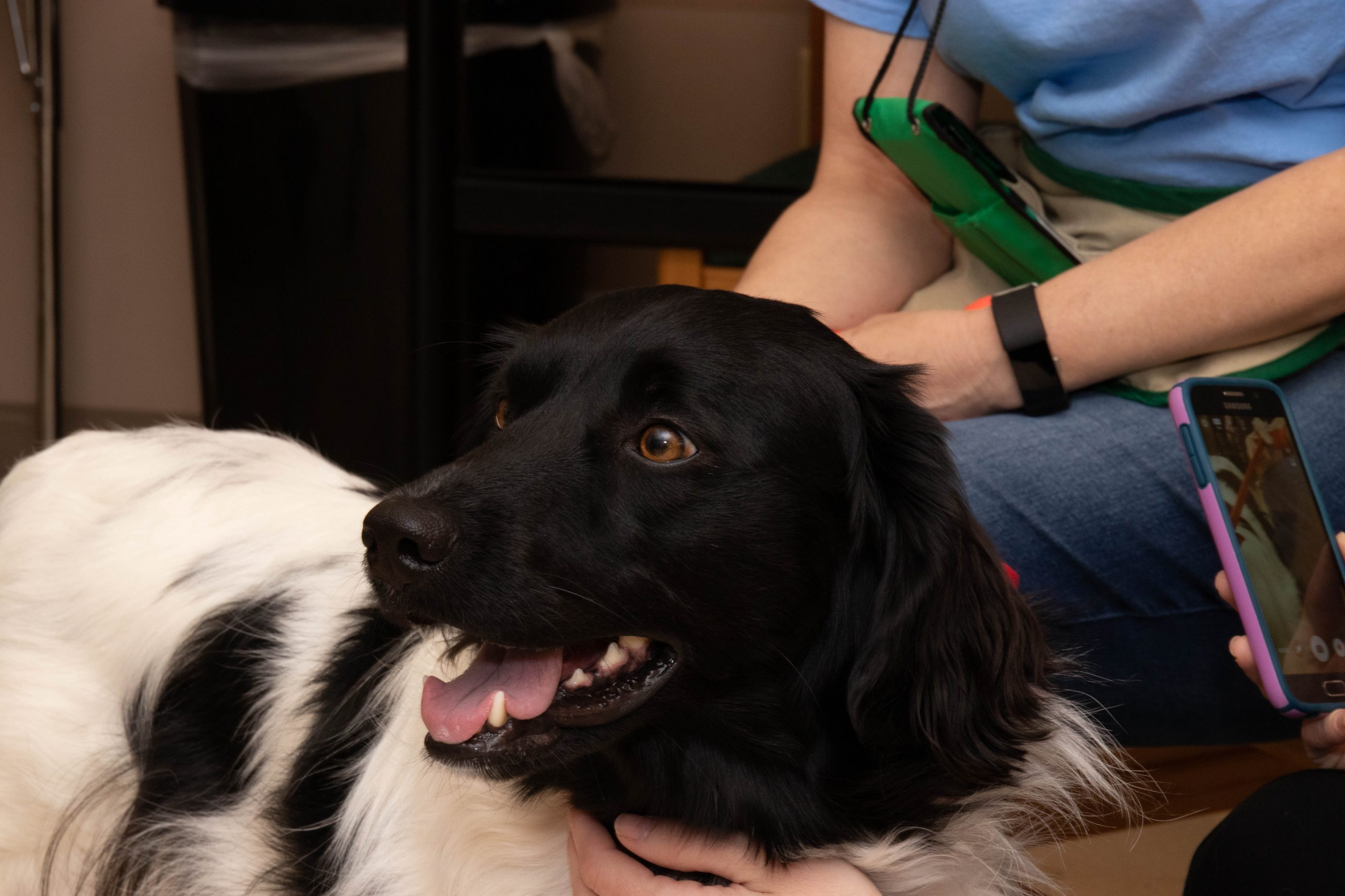 Therapy Dog at The School at Springbrook