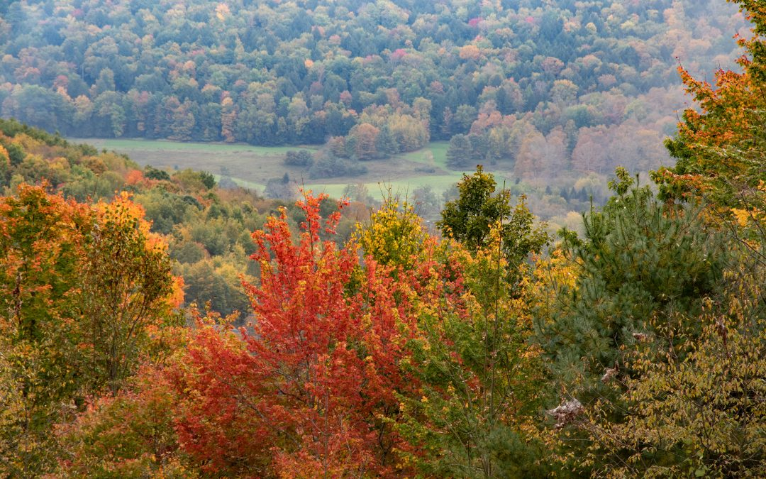 Donor Dollars at Work – Springbrook's Nature Trail in Autumn